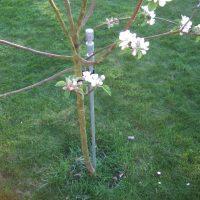 1-5m-ornate-galvanised-steel-tree-stakes-1416586319-jpg